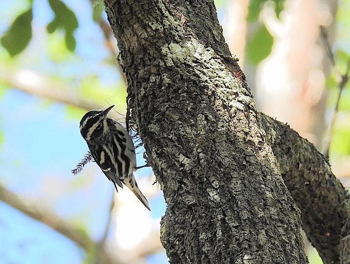 Birdwatching for Everyone - Week 1 image