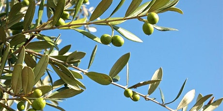 History Festival - The Story of Food and the Humble Olive in Burnside tickets