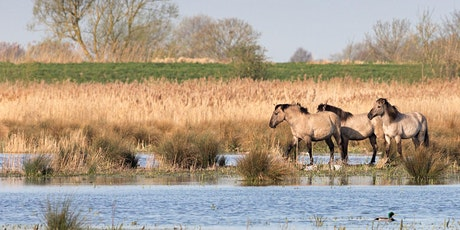Timed entry to Wicken Fen National Nature Reserve (12 Apr - 18 Apr) tickets
