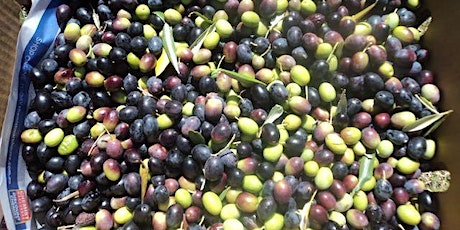 Community Olive Harvest 2021 - Saturday pm and Sunday am April 17-18th tickets