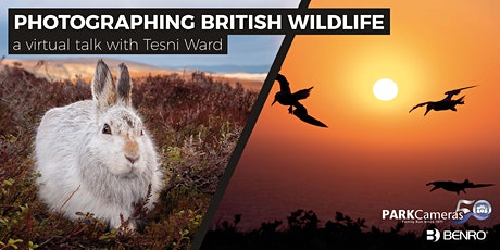 Photographing British Wildlife; a virtual talk with Tesni Ward tickets