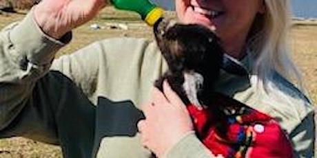 Baby Goat, Bunny, Alpaca Snuggle & Bottle Feed tickets
