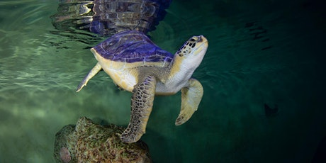The Clearwater Marine Aquarium Presents: Totally Turtles! tickets