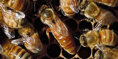 2021 National Honey Bee Day tickets
