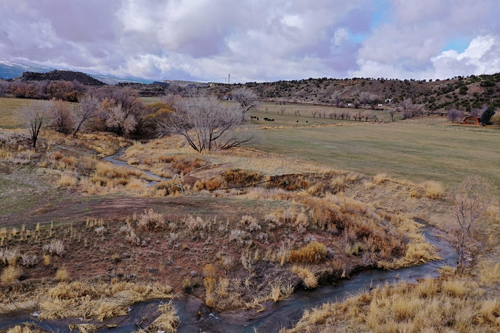Riparian Restoration at Rifle Creek Ranch image