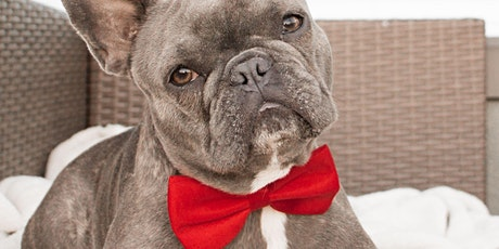 Classy Canines Anniversary Celebration tickets