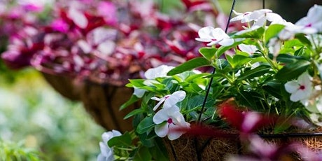 Hanging Basket Workshop - Sunday tickets
