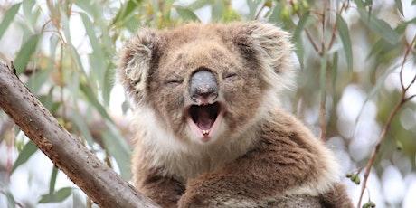 Koala Conservation Day - Tree Planting! tickets