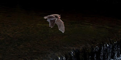 Bats of the Highlands talk and short North of Scotland Group AGM tickets