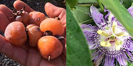 Native Edible Plants tickets