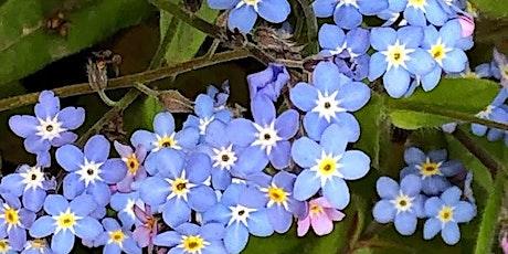 Wellbeing on Wednesday - Spring Virtual Herb Walk tickets