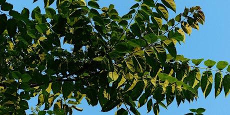Chantier participatif gestion durable des espèces exotiques envahissantes billets