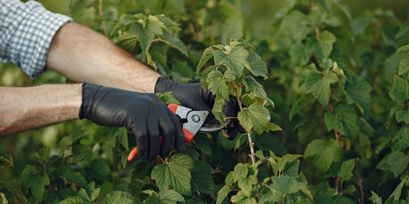 Pruning Fruit Trees, Shrubs, and Vines tickets
