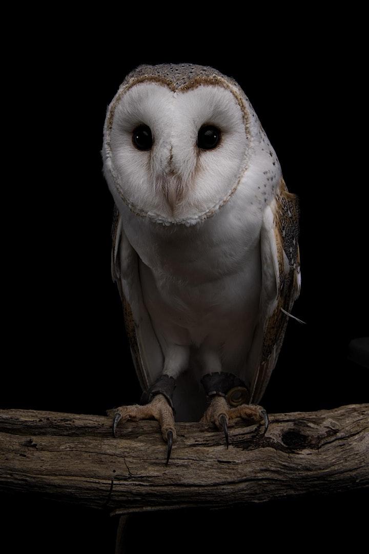 Ultimate Wildlife Studio & Natural Habitat Photography Experience image
