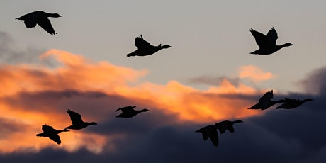 After-hours Goose Gathering tickets