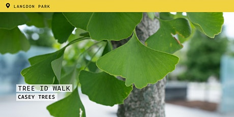 Tree ID Walk: Langdon Park tickets