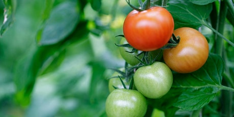 Tomato Master Class with Tyler Froberg, Managing Director of Hope Farms tickets