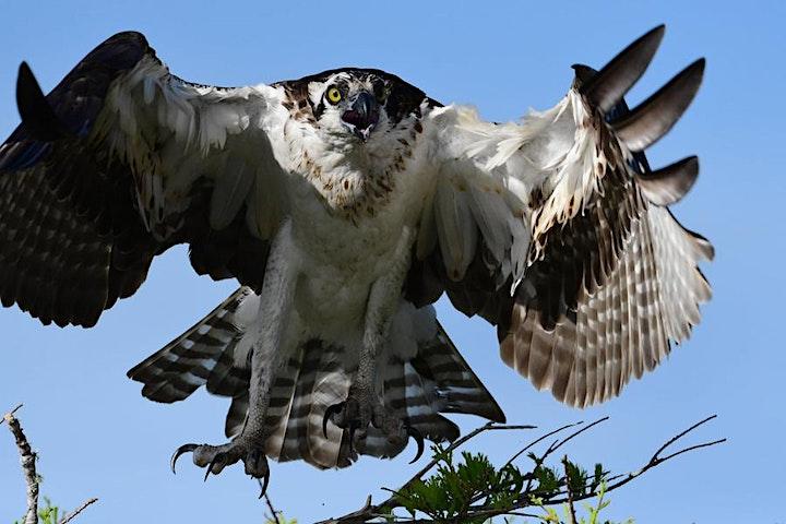 Backyard Birds: Making Dynamic Photos of Birds in Your Own Backyard image