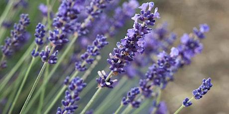 Lavender U-Pick tickets