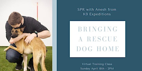 Bringing A Rescue Dog Home  - SPR x K9 Expeditions Webinar tickets