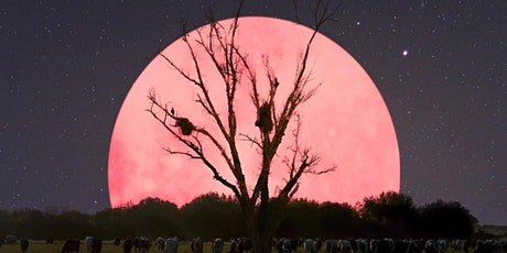 Pink Full Moon Ceremony tickets