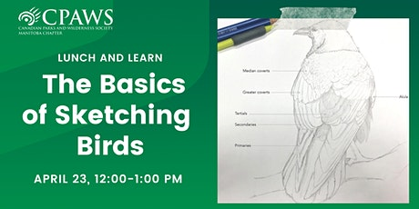 The Basics of Sketching Birds: How To Draw Feathered Friends tickets