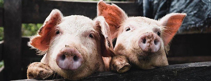 """Carnitas For A Cause"" To Benefit Zanzenberg Farms image"