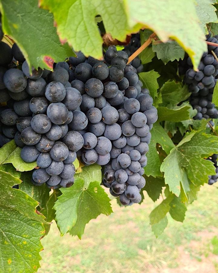 Linear Wines - Pinot & Tempranillo Night image