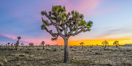 Joshua Tree and Beyond...Photography Tour & Instructional Class tickets