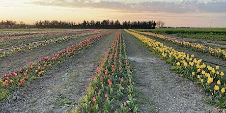 Acquisto tulipani in campo  SOLO RESIDENTI FOGGIA biglietti