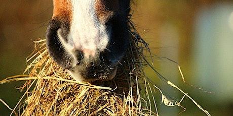 """Onlinekurs """"Pferde fit füttern"""" mit Dr. Christina Fritz Tickets"""