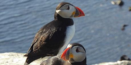 RSPB - British Coastal to Wetland Birds with Alan Sharpe tickets