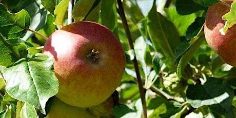 Gratis fruitboom: fruitig en groen Zuidplas (4 mei ophalen) tickets