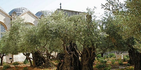 Virtual Tour:  In Jesus' Footsteps at the Mount of Olives tickets