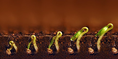 Lunch & Learn Session 1: Seed Starting Workshop tickets