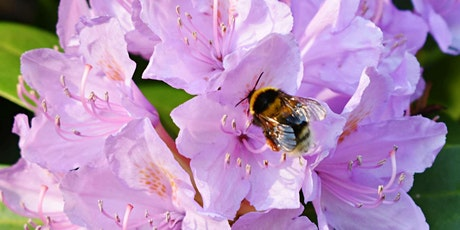 Sustainable gardening for wildlife - Ready, Set, Garden! tickets