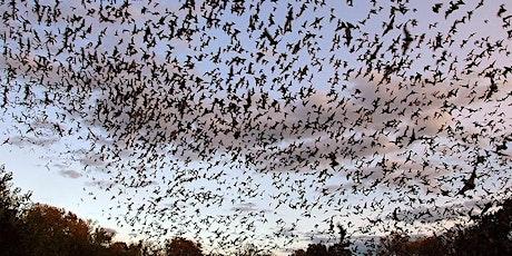 Bracken Cave Preserve Public Bat Flights 2021 - July tickets