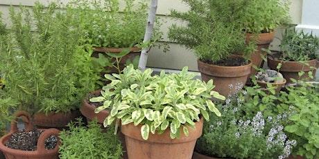 Growing Culinary Herbs tickets
