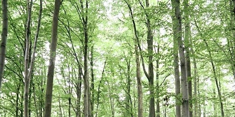 Beech Tree Hike through the Sonian Forest tickets