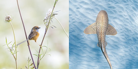 Capturing Wildlife Above and Below the Surface tickets