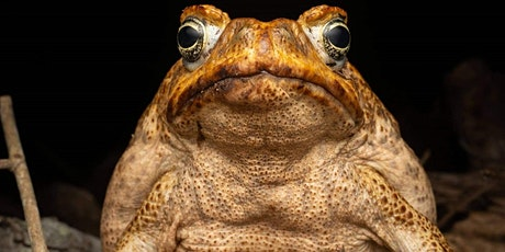 Cane Toad Control tickets