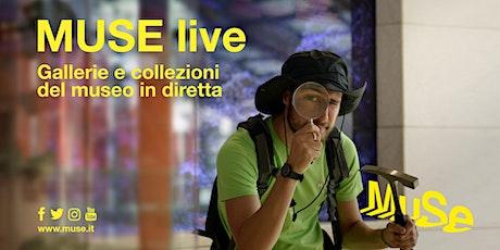 MUSE  live -  Ghiacciai e alte vette biglietti
