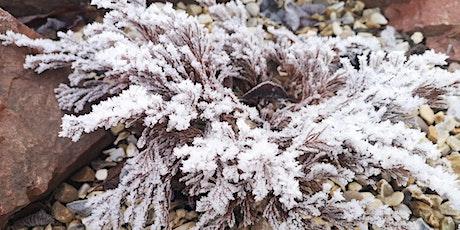 Winter gardening: Top jobs - Ready, Set, Garden! tickets