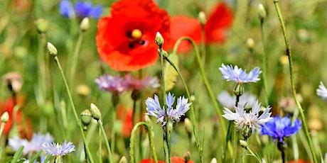 Growing a Pollinator Garden: Restoring Habitat in Your Own Backyard tickets