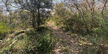 Passeggiata Naturalistica al Bosco di Monte Ceraulo tickets