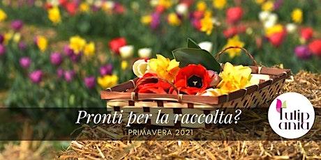 #Tulipania2021 Cogli la primavera con le tue mani-APERTI PER RACCOLTA FIORI biglietti