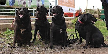 Lodders Charitable Foundation Annual Dog Walk tickets