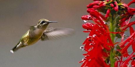 Pollinator Pathways: Encouraging Biodiversity in Urban Habitats tickets