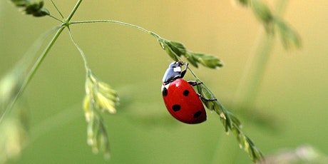 Good bugs for your garden tickets