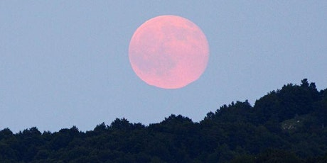 Blossoming with the Super Pink Moon - A Creative Healing Session tickets